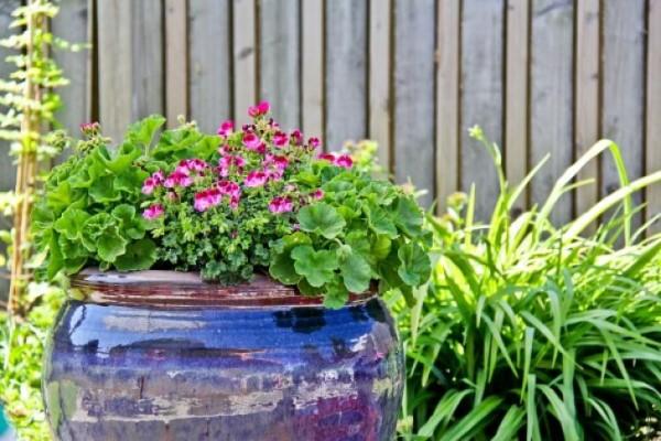 Hjælp til haven i sommervarmen
