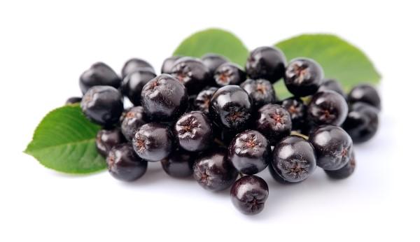 Aronia kaldes verdens bedste antioxidant og har mange gode egenskaber.