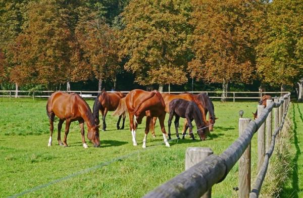 Efterårets agern kan forgifte din hest