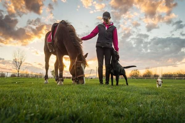 Hvornår skal din hest på pension?