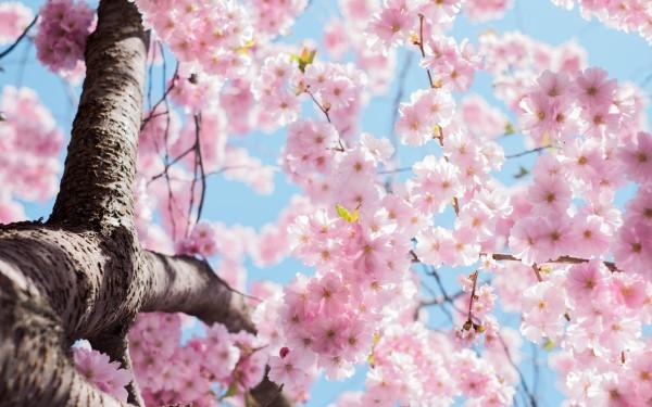 Tips til haven i april