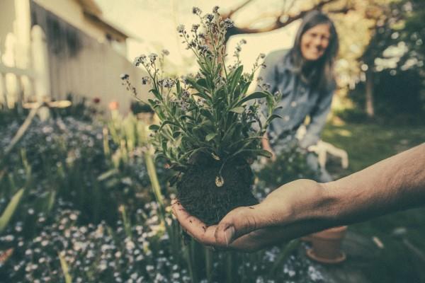 Kom godt i gang med havearbejdet