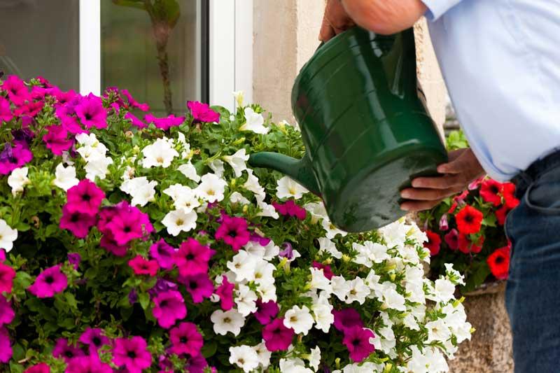 Hvordan vander du bedst haven – få 10 tips her