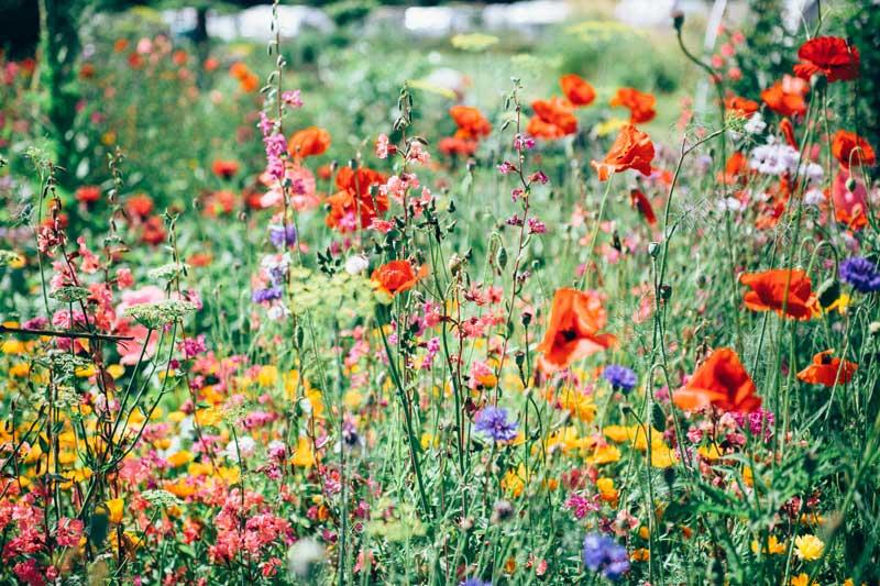 Haveejere hjælper klimaet