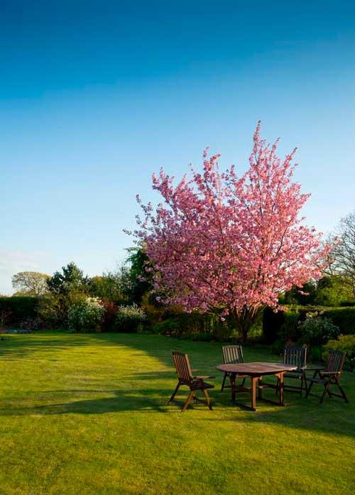 Tænk over hvordan du indretter din have. Plant ikke mere end du kan overkomme at vedligeholde.