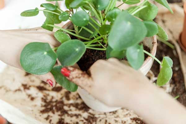 Få succes med indendørs planter