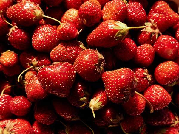 Du kan let selv dyrke jordbær i haven. Følg de gode råd og tips til dyrkning.