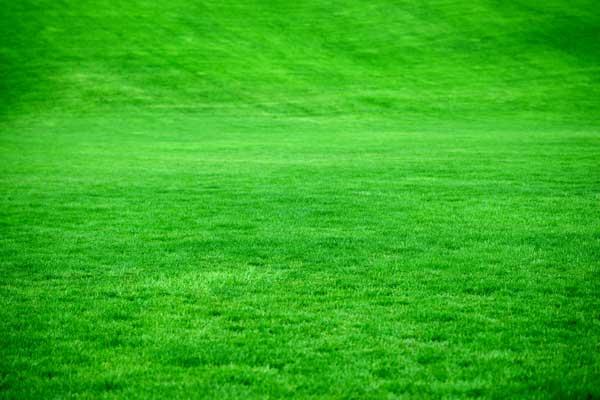 Få flot ny græsplæne ved at følge anvisningerne