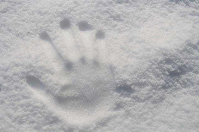 Er dit hus og have klar til kulden?