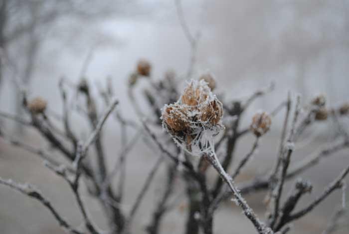 Sådan gør du haven vinterklar