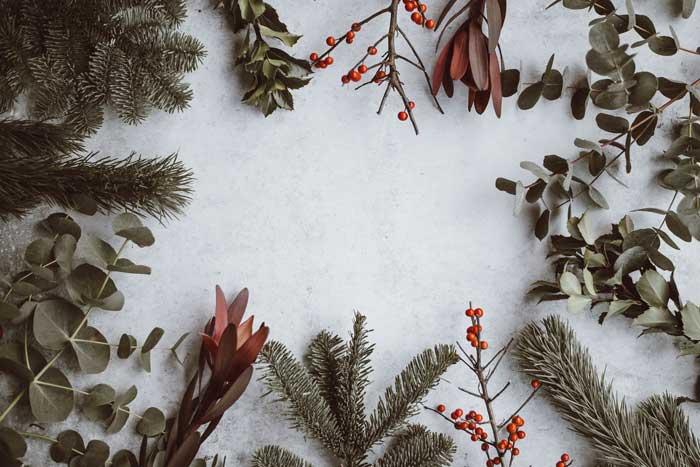 Skimmelsvampe, juletid og allergi