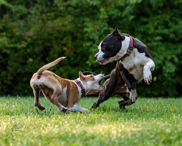 Undgå bidsår hos hunde