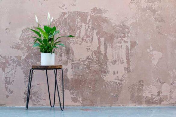 12 planter er renser luften - her en fredslillje