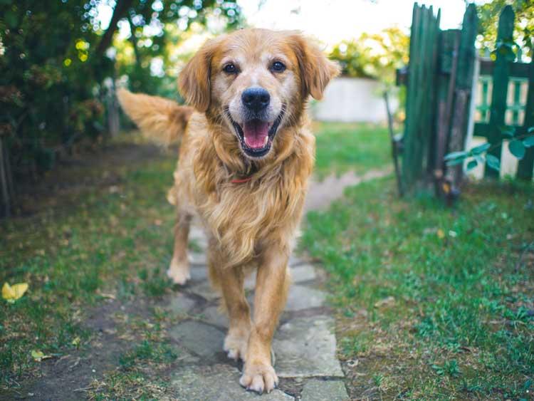 Er det hundedyrt at holde hund?