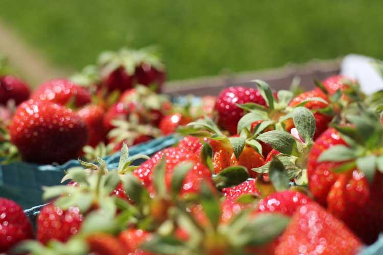 Lad ukrudtsdugen være fyldt med jordbær