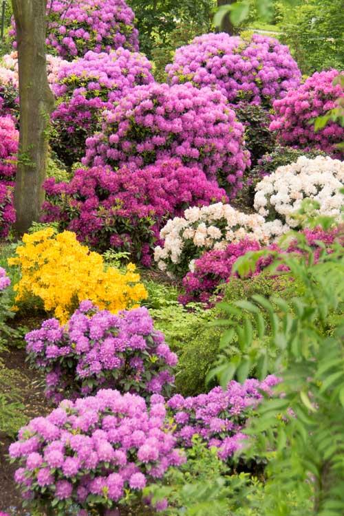 Variation til surbundsbedet giver et smukt blomstrende bed næsten hele året.
