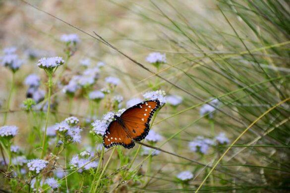 Læs om hvorfor biodiversitet er godt for haven og for miljøet.