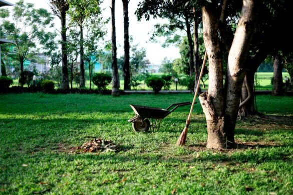 Havearbejde i juli måned - se her hvordan du får hjælp til haven.