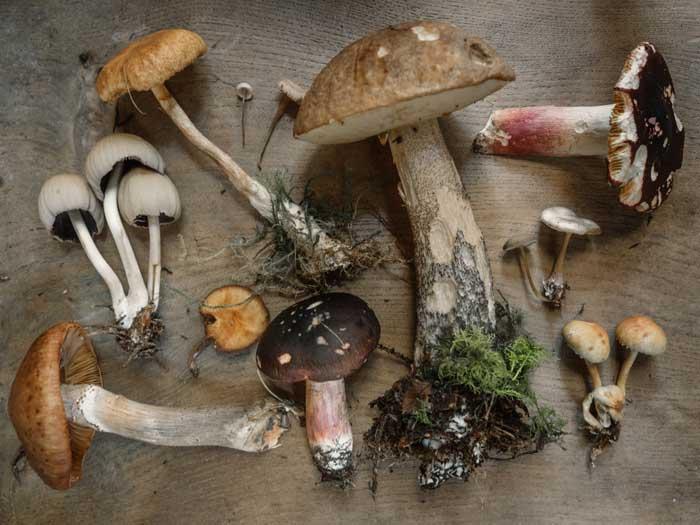 Læs om giftige svampe
