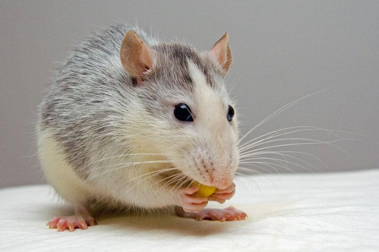 Skadedyr i hjemmet skal bekæmpes hurtigt og effektivt og helst af en professionel skadedyrsbekæmper.