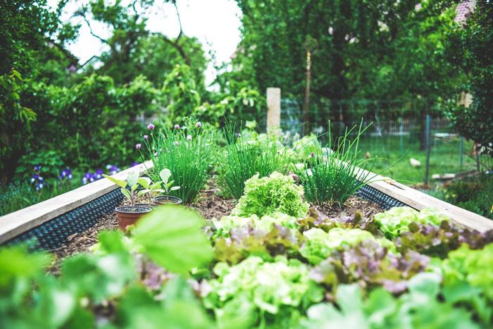 Planlæg din køkkenhave og nyd frisk grønt hele sommeren