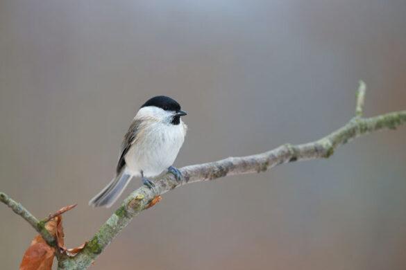 Sådan fodrer du fugle om vinteren - tips til vinterfoder