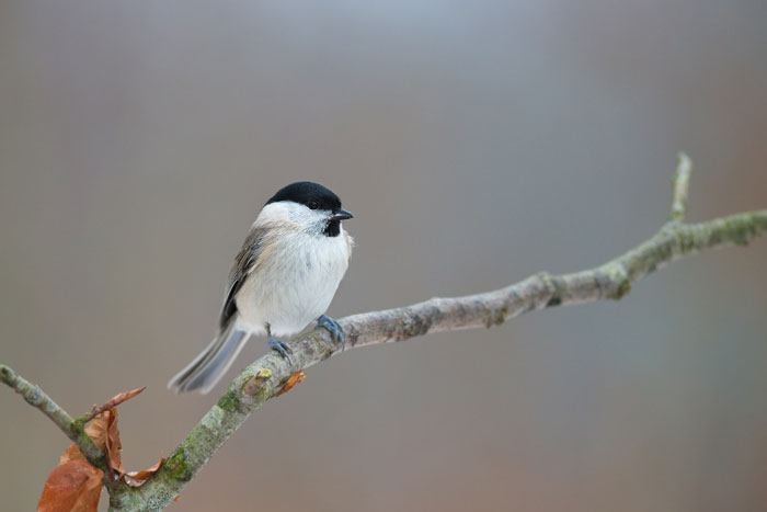 Sådan fodrer du fugle om vinteren