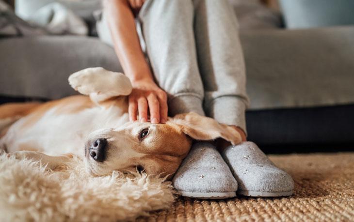 Har du skimmel i boligen kan du også gå ud over dit kæledyr. Læs her hvordan det påvirkes.