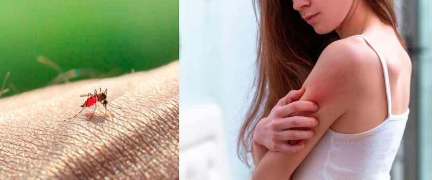 MyggA beskytter mod myggestik i op til 2 timer
