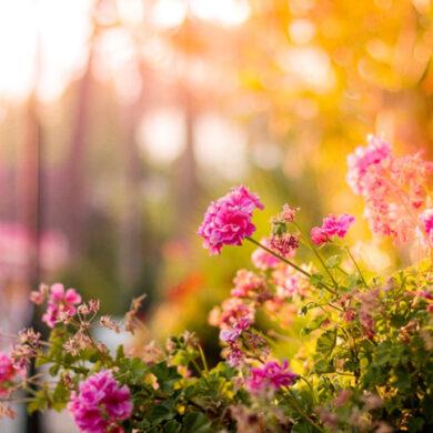 3 tips til at få haven til at skinne igennem